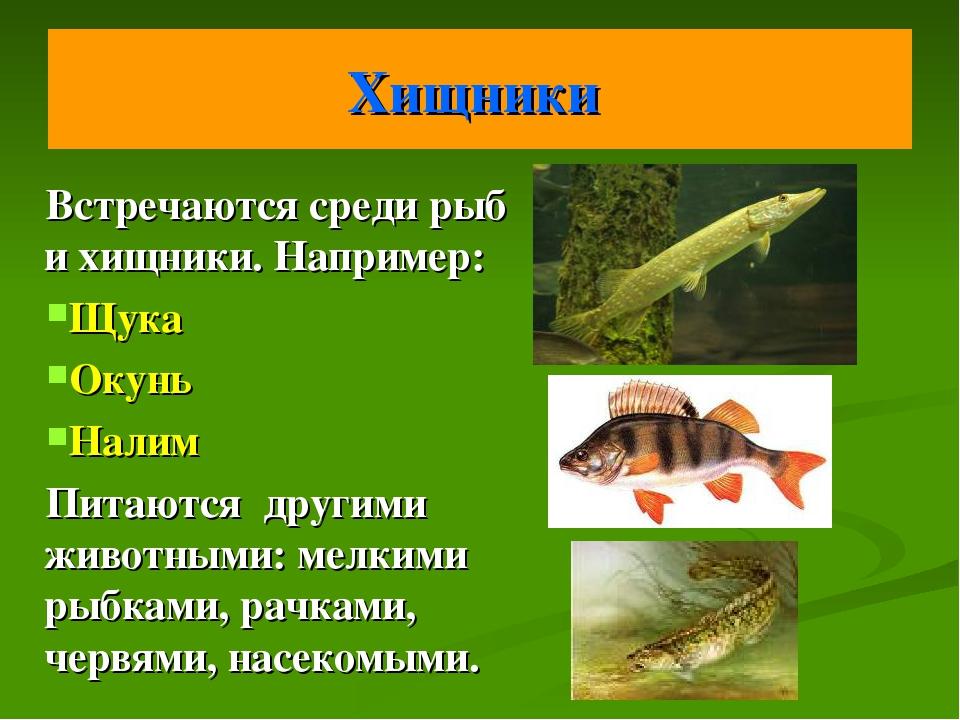 Хищники Встречаются среди рыб и хищники. Например: Щука Окунь Налим Питаются...