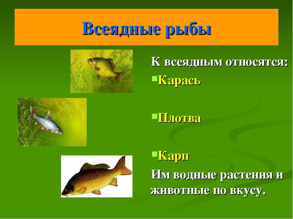 Всеядные рыбы К всеядным относятся: Карась Плотва Карп Им водные растения и ж...