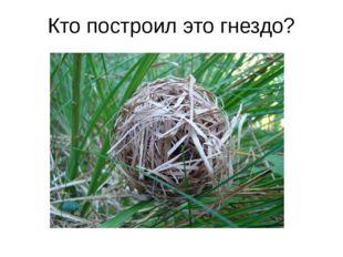 Кто построил это гнездо?