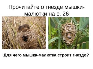 Прочитайте о гнезде мышки-малютки на с. 26 Для чего мышка-малютка строит гнез