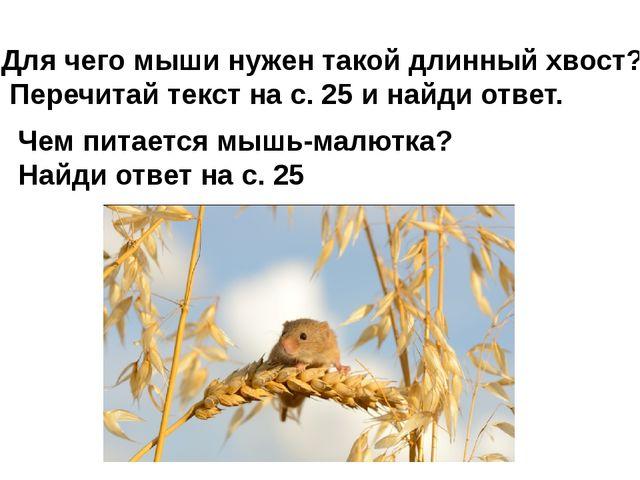 Для чего мыши нужен такой длинный хвост? Перечитай текст на с. 25 и найди отв...