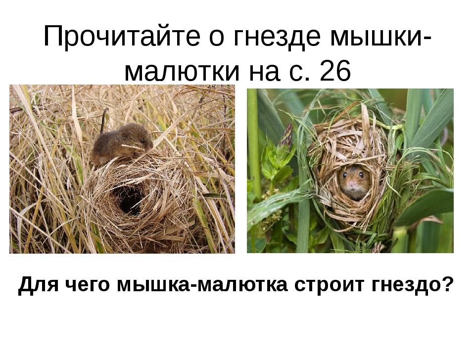 Прочитайте о гнезде мышки-малютки на с. 26 Для чего мышка-малютка строит гнез...