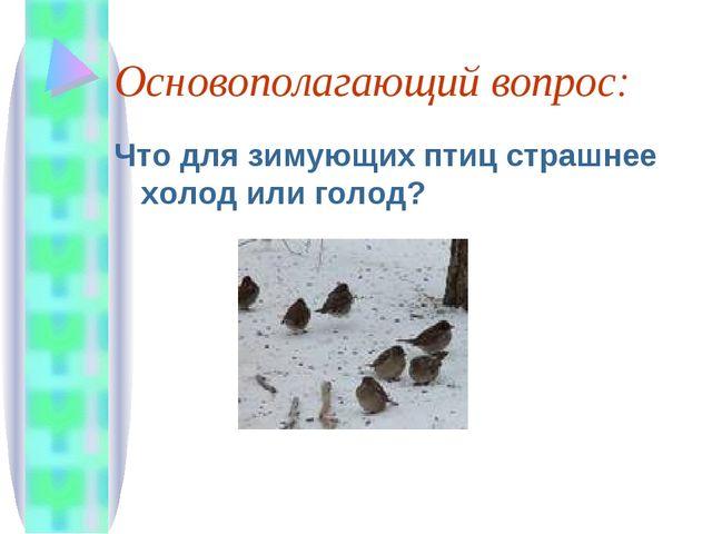 Основополагающий вопрос: Что для зимующих птиц страшнее холод или голод?