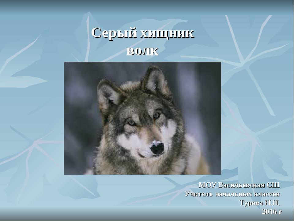 Серый хищник волк МОУ Васильевская СШ Учитель начальных классов Турова Н.Н....