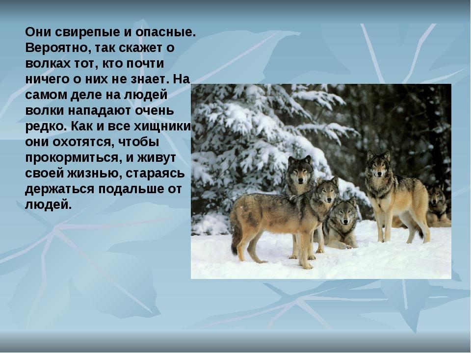 Они свирепые и опасные. Вероятно, так скажет о волках тот, кто почти ничего о...
