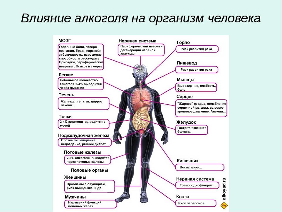 Влияние одежды на организм человека