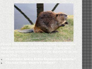 Речной бобр является самым большим по размерам представителем грызунов в Росс