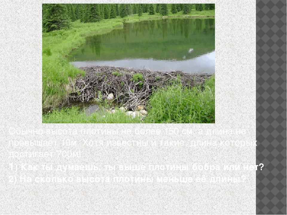 Обычно высота плотины не более 150 см, а длина не превышает 10м. Хотя известн...