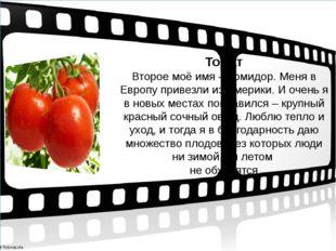 Томат Второе моё имя – помидор. Меня в Европу привезли из Америки. И очень я