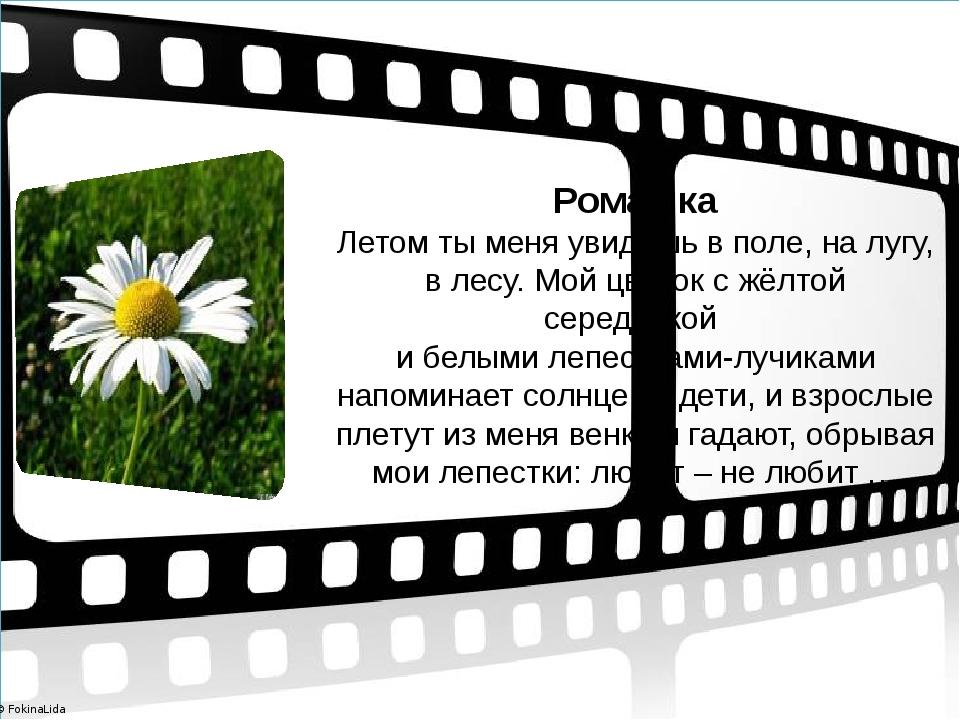 Ромашка Летом ты меня увидишь в поле, на лугу, в лесу. Мой цветок с жёлтой с...