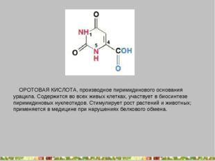 ОРОТОВАЯ КИСЛОТА, производное пиримидинового основания урацила. Содержится в