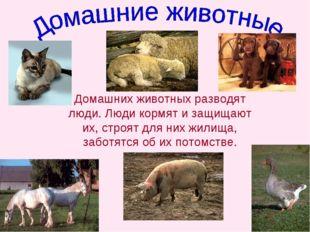 Домашних животных разводят люди. Люди кормят и защищают их, строят для них жи
