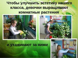 Чтобы улучшить эстетику нашего класса, девочки выращивают комнатные растения