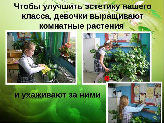 Чтобы улучшить эстетику нашего класса, девочки выращивают комнатные растения...