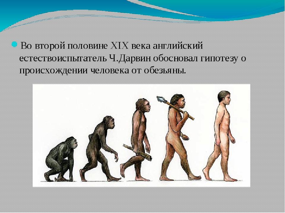 Во второй половине XIX века английский естествоиспытатель Ч.Дарвин обосновал...