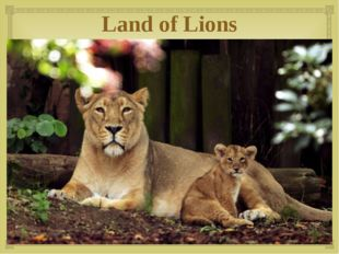 Land of Lions 