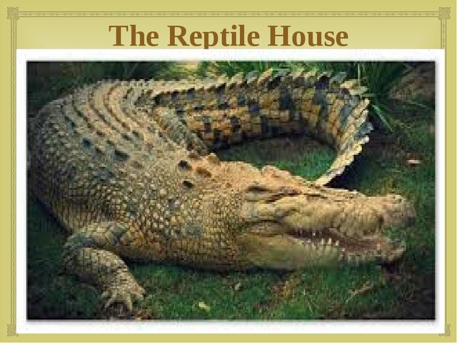 The Reptile House 
