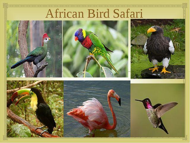 African Bird Safari 