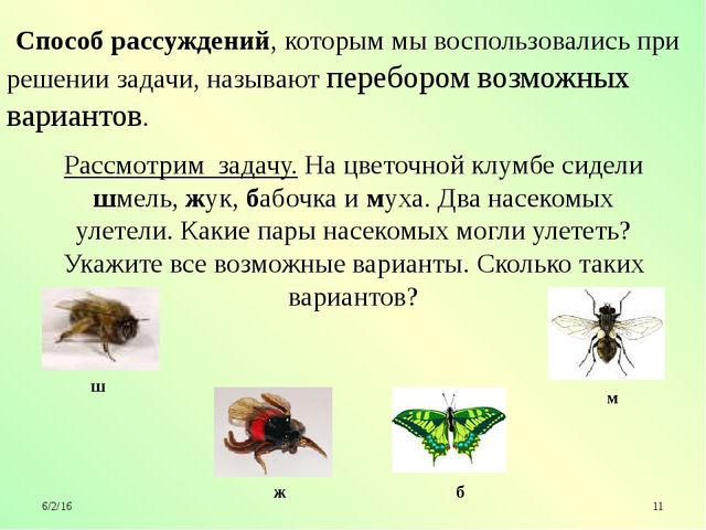 Рассмотрим задачу. На цветочной клумбе сидели шмель, жук, бабочка и муха. Дв...