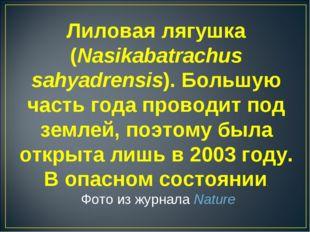 Лиловая лягушка (Nasikabatrachus sahyadrensis). Большую часть года проводит п