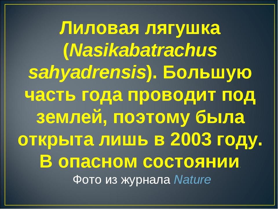 Лиловая лягушка (Nasikabatrachus sahyadrensis). Большую часть года проводит п...