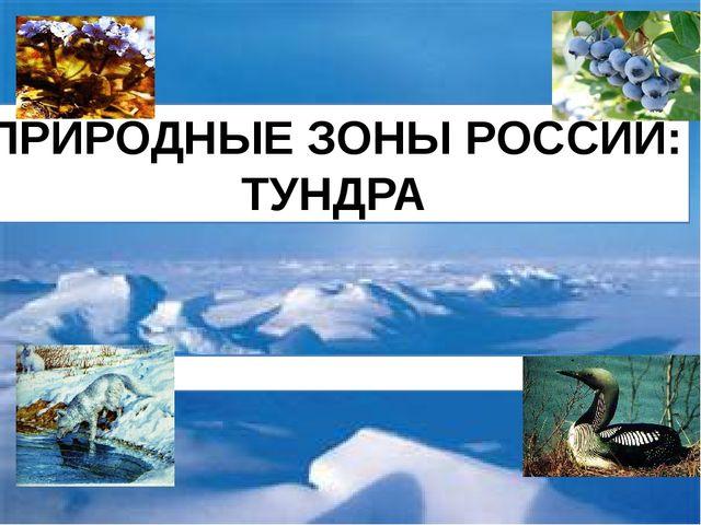 ПРИРОДНЫЕ ЗОНЫ РОССИИ: ТУНДРА