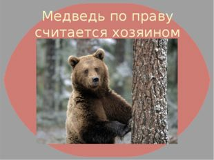 Медведь по праву считается хозяином русского леса