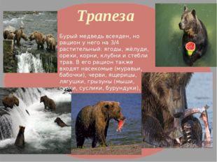 Трапеза Бурый медведь всеяден, но рацион у него на 3/4 растительный: ягоды, ж