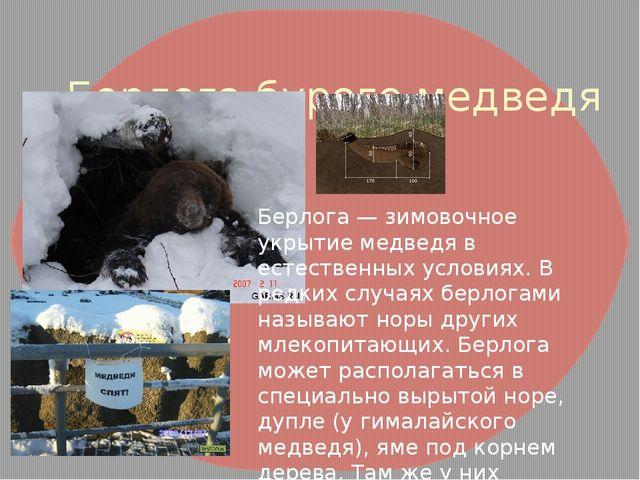 Берлога бурого медведя Берлога — зимовочное укрытие медведя в естественных у...