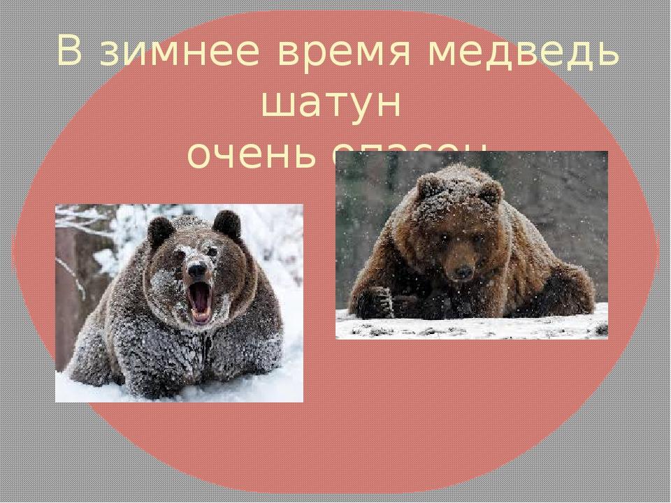 В зимнее время медведь шатун очень опасен
