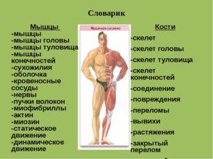 Словарик Кости -скелет -скелет головы -скелет туловища -скелет конечност