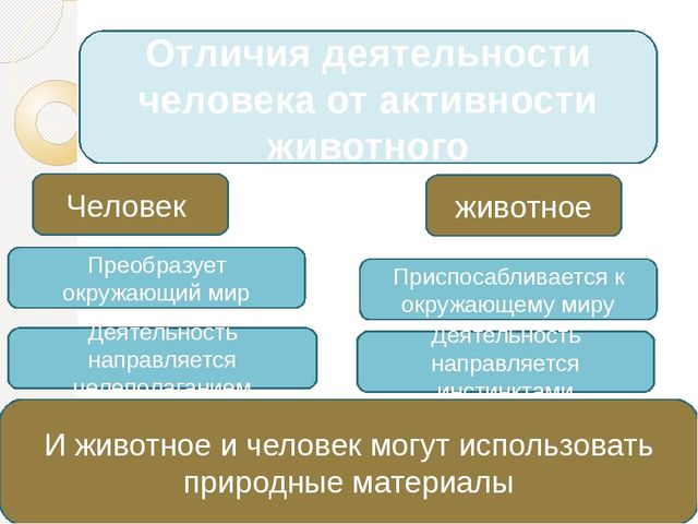 Отличия деятельности человека от активности животного Человек Преобразует окр...