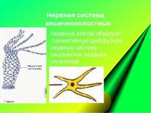 Нервные клетки образуют примитивную диффузную нервную систему- рассеянное не