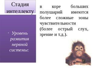 Стадия интеллектуального поведения (приматы, дельфины) в коре больших полушар
