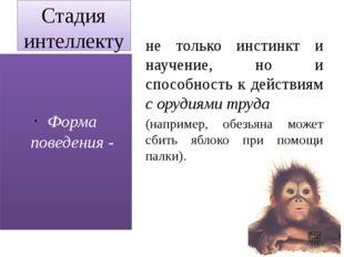 Стадия интеллектуального поведения (приматы, дельфины) не только инстинкт и н