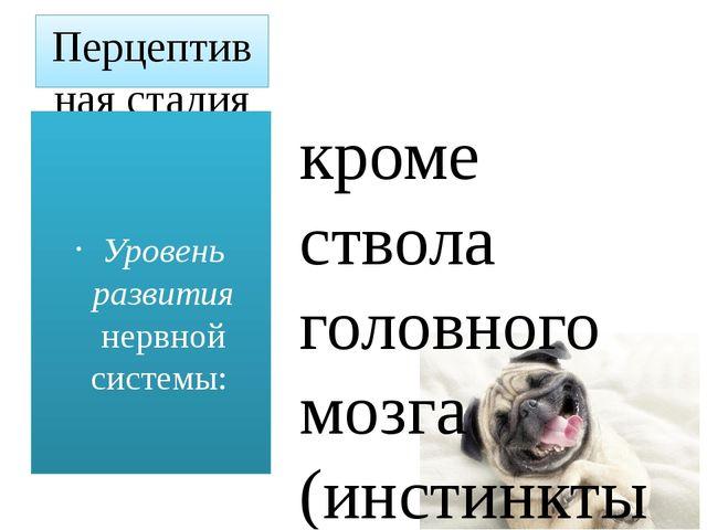 Перцептивная стадия (позвоночные, млекопитающие) кроме ствола головного мозга...