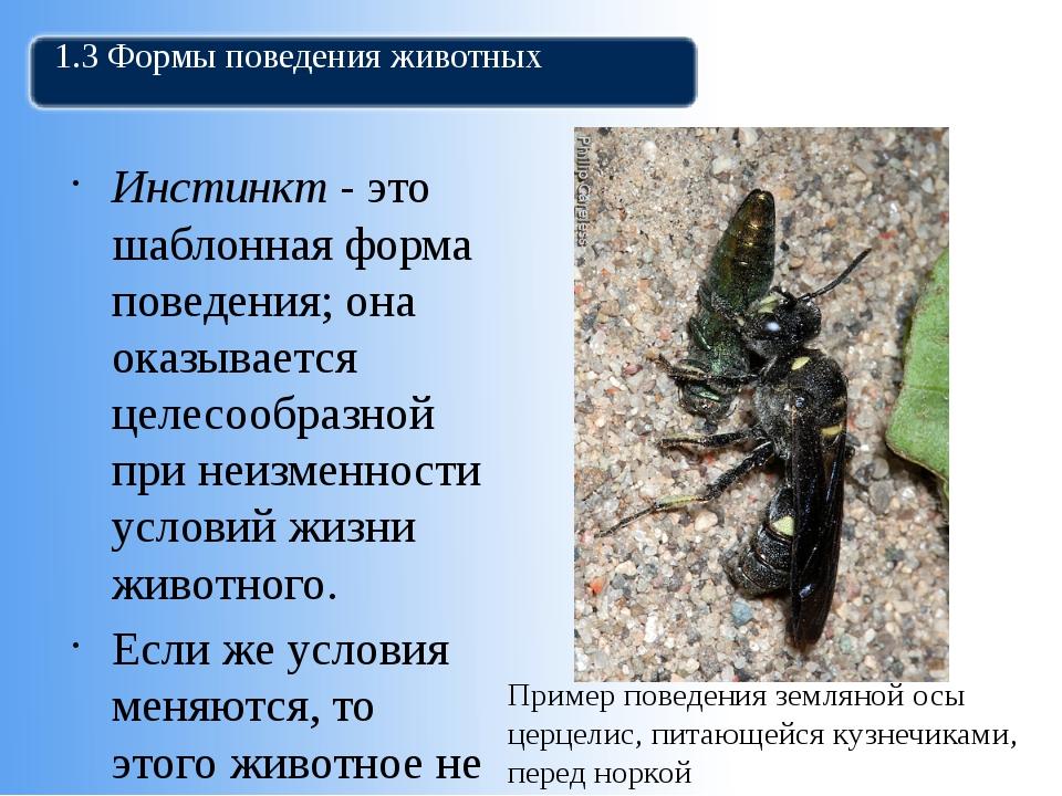1.3 Формы поведения животных Инстинкт - это шаблонная форма поведения; она ок...