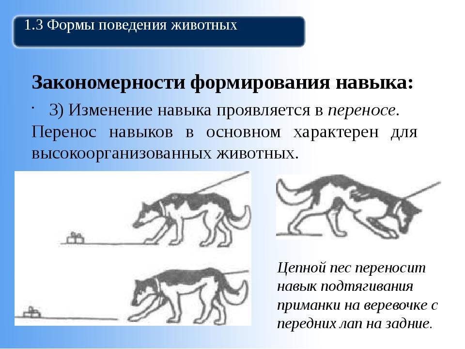 1.3 Формы поведения животных Закономерности формирования навыка: 3) Изменение...
