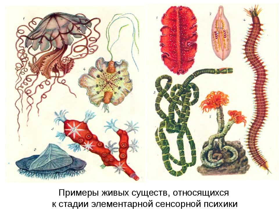 Примеры живых существ, относящихся к стадии элементарной сенсорной психики