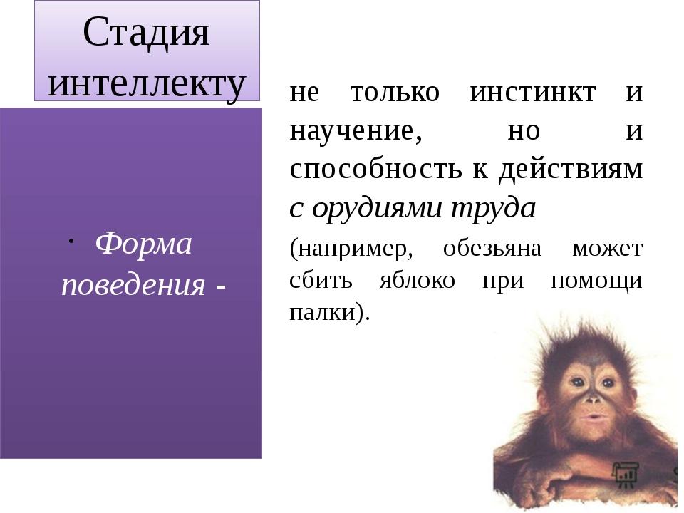 Стадия интеллектуального поведения (приматы, дельфины) не только инстинкт и н...