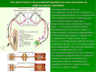 Вся деятельность вегетативной нервной системы построена по рефлекторному прин