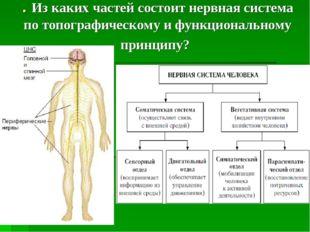 . Из каких частей состоит нервная система по топографическому и функционально