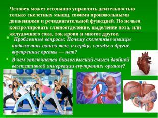 Человек может осознанно управлять деятельностью только скелетных мышц, своими