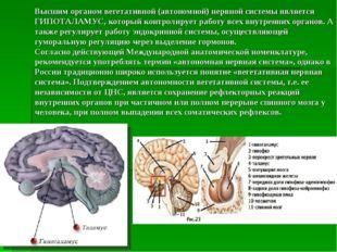 Высшим органом вегетативной (автономной) нервной системы является ГИПОТАЛАМУС