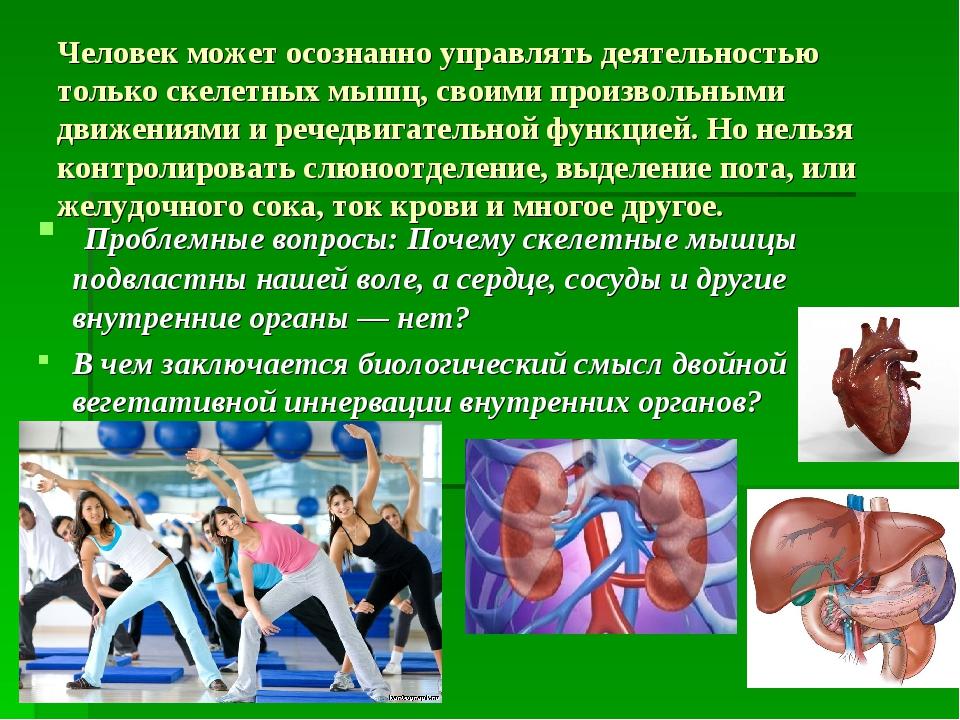 Человек может осознанно управлять деятельностью только скелетных мышц, своими...