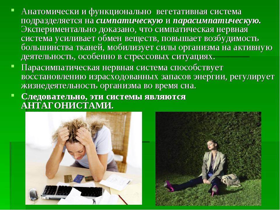 Анатомически и функционально вегетативная система подразделяется на симпатиче...