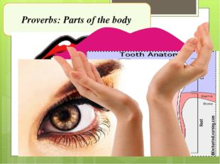 Proverbs: Parts of the body