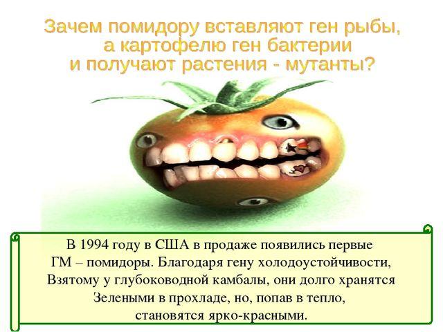В 1994 году в США в продаже появились первые ГМ – помидоры. Благодаря гену хо...