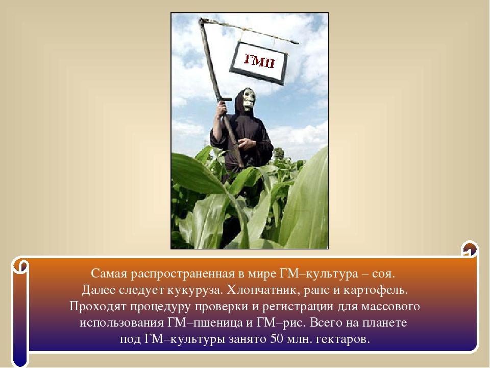 Самая распространенная в мире ГМ–культура – соя. Далее следует кукуруза. Хлоп...