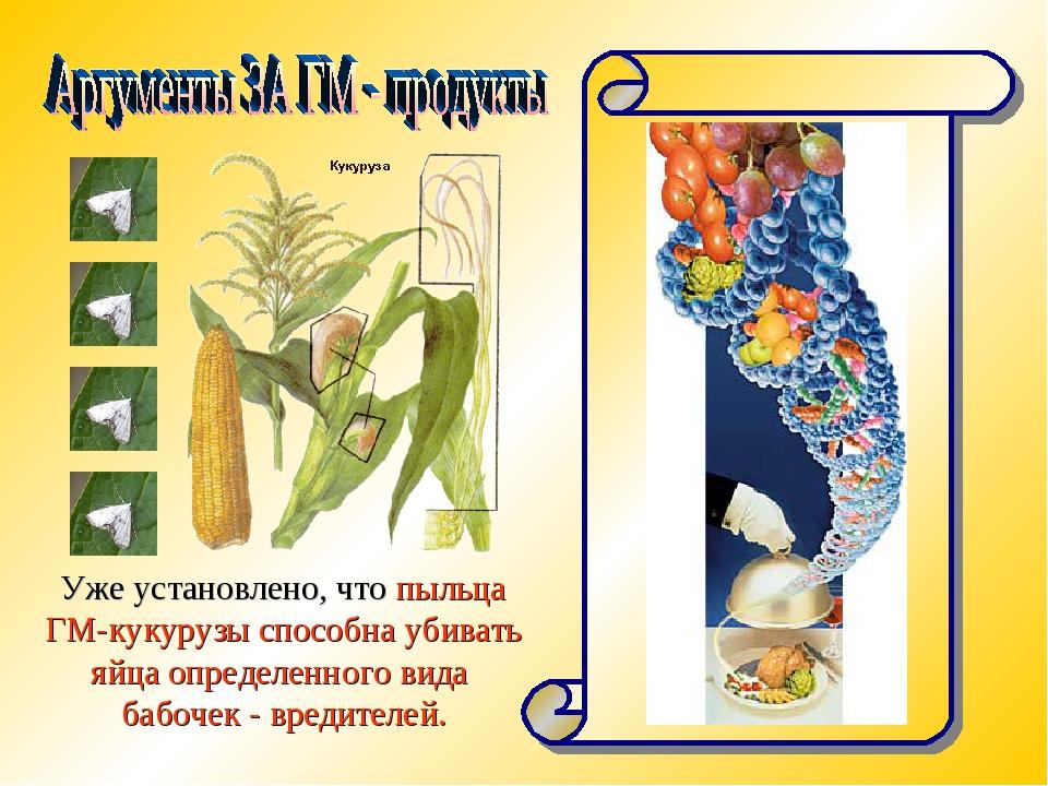 Уже установлено, что пыльца ГМ-кукурузы способна убивать яйца определенного в...